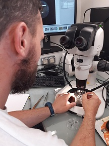 analyse ovocytes